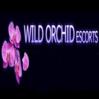 Wild Orchid Escorts  London logo